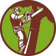 Спилить дерево,  опил веток,  корчевание пней,  вывоз остатков 300-616