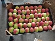 Яблоко оптом из Беларуси от производителя.
