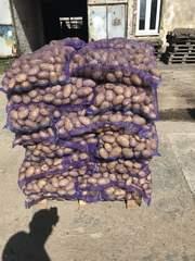Картофель и другие овощи из Беларуси оптом.